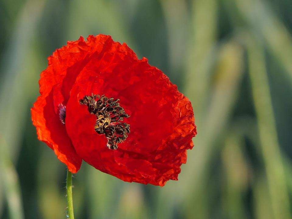 2019 Veterans Day Honor Garden Blooming